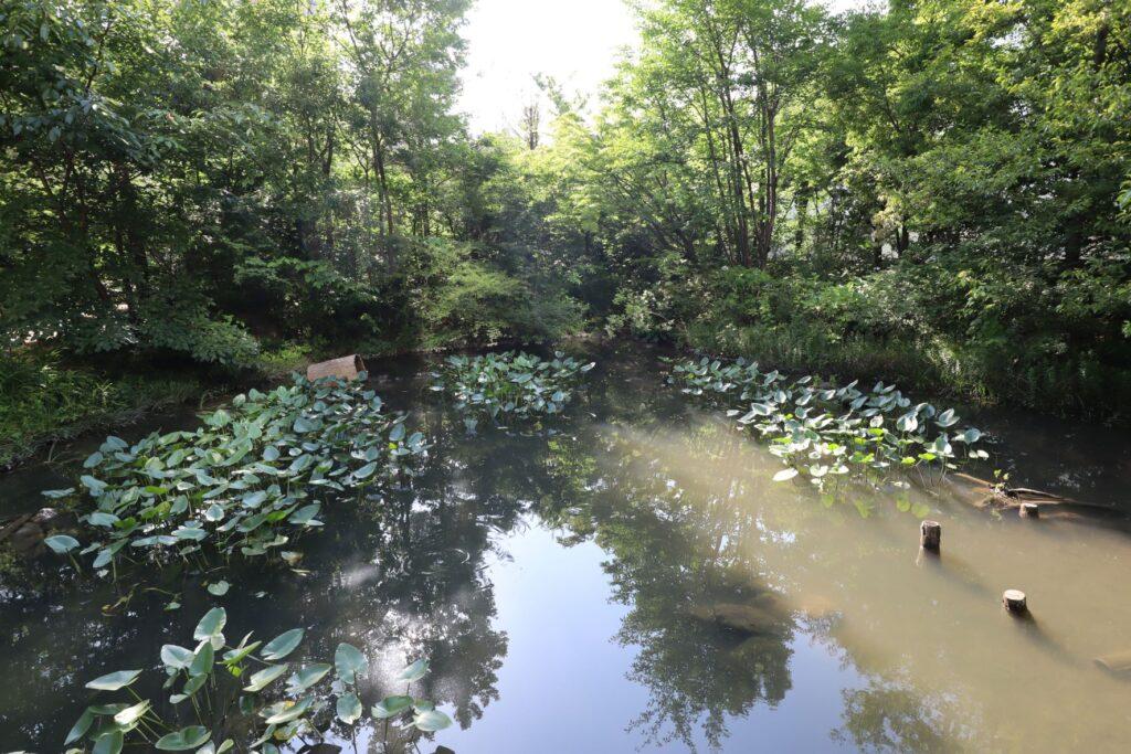 深川ギャザリアのフジクラ木場千年の森