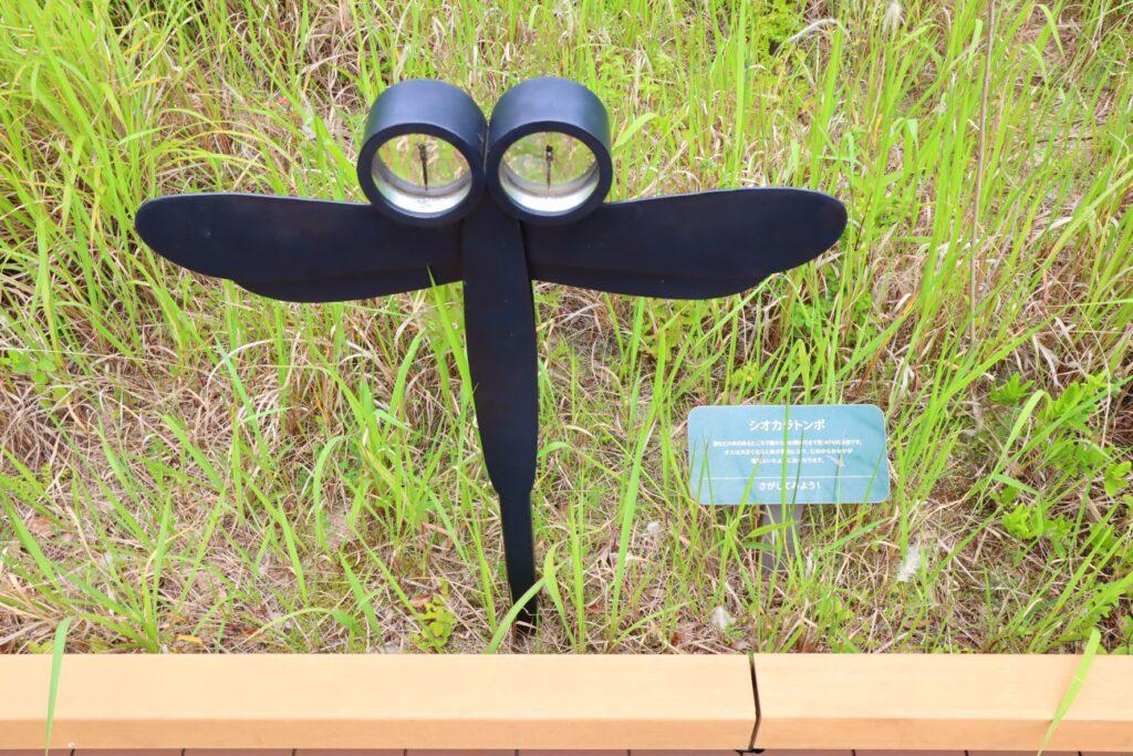 二子玉川ライズのルーフガーデンの昆虫展示