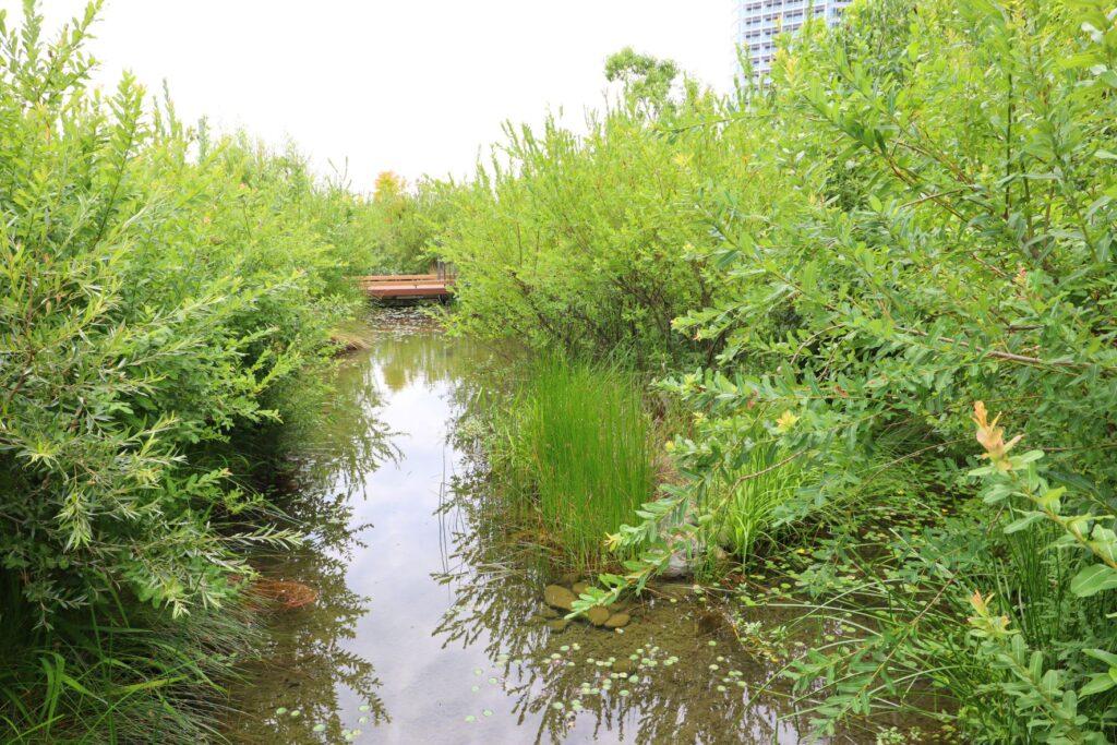 二子玉川ライズのルーフガーデンの池