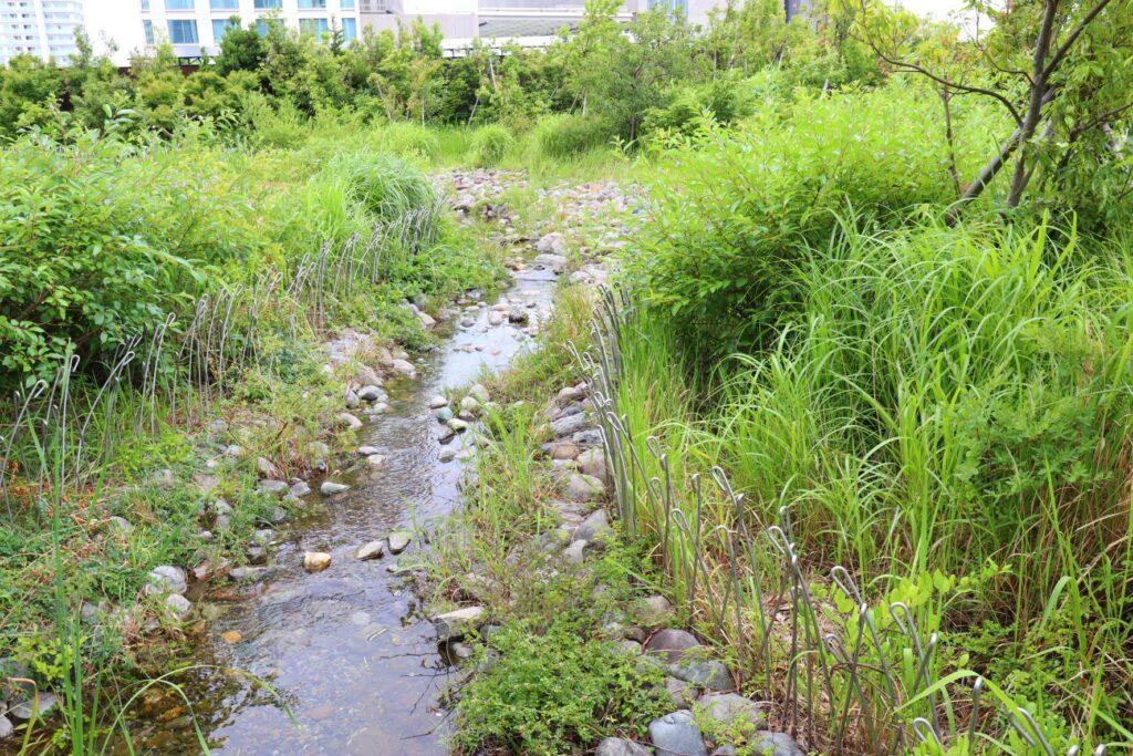 二子玉川ライズのルーフガーデンの川