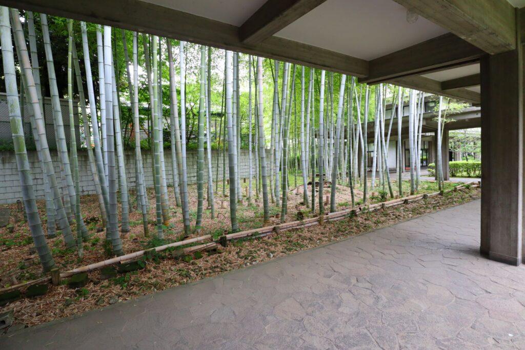 乗泉寺の竹林