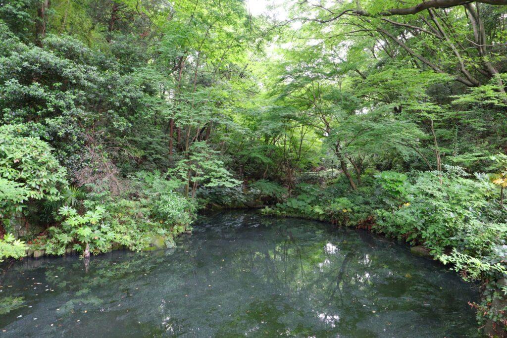 川崎市民プラザの日本庭園の池