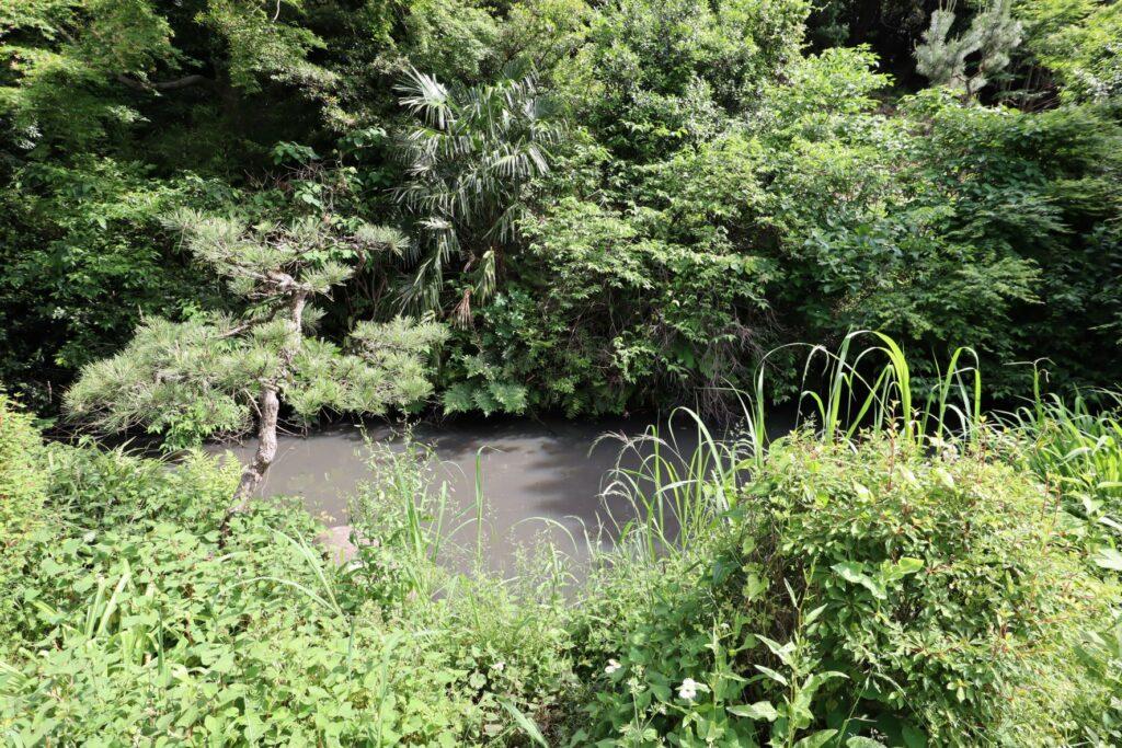 飯田家住宅の庭