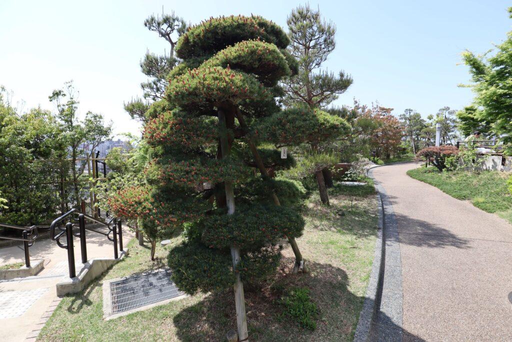 目黒天空庭園の四季の庭