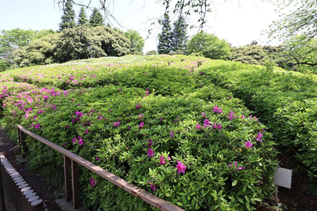 世田谷公園の高台