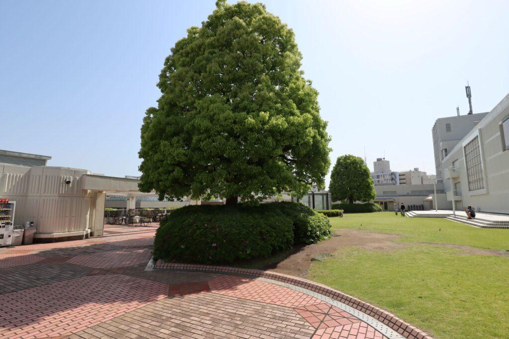 東急百貨店たまプラーザ店3階ガーデンプラーザ